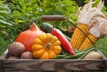 16623605-basket-with-vegetables