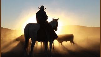 CowboySun