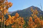 fall-trees-background1.jpg