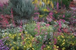 xeriscape-background.jpg