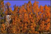 Autumn-Danny Enger